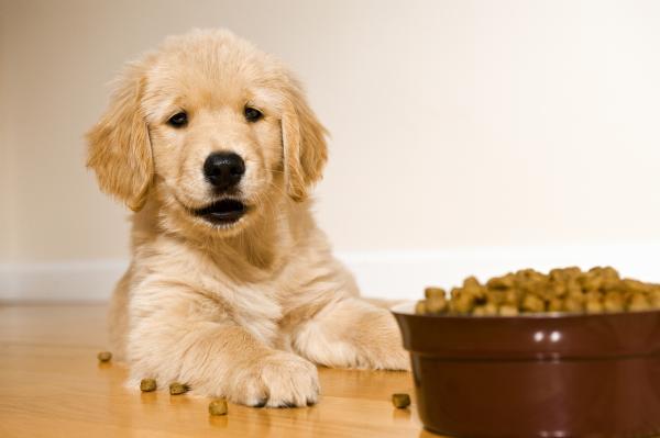 aliment chien